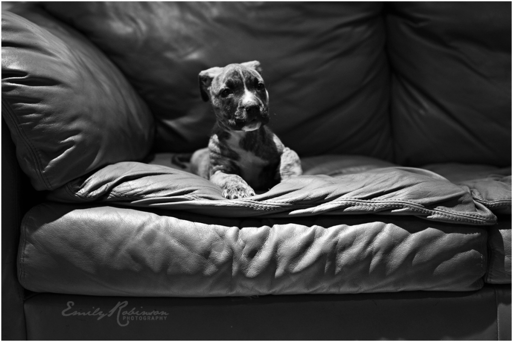 heywang-pup011