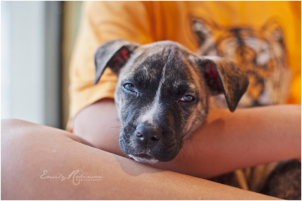 heywang-pup014